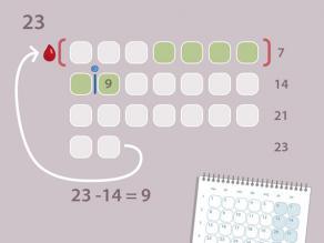 Voorbeeld 2 - regelmatige cyclus van 23 dagen: de eisprong zal plaatsvinden rond dag 9 van de cyclus. U kunt ongeveer 5 dagen voor en 1 dag na de eisprong zwanger worden.
